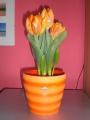 meine_tulpen (7)