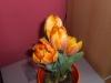 meine_tulpen (2)