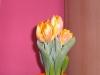 meine_tulpen (4)