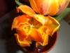 meine_tulpen (5)